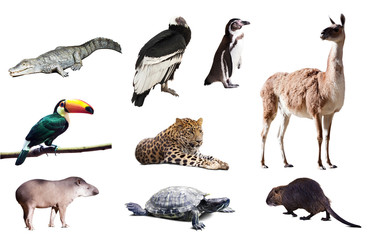 Fauna of South America