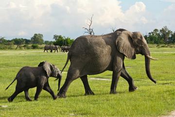 Elfantenmama mit Baby in der Savanne
