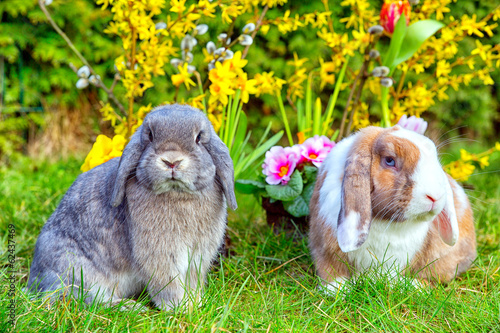 Osterhasen sitzen im Garten vor Blumen