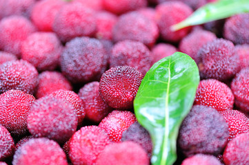 fresh red bayberry