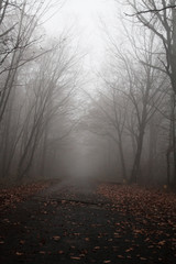 Road in the foggy