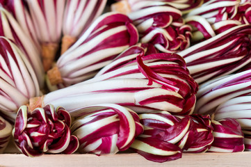 Fresh red chicory on the market