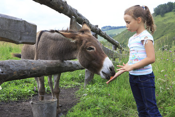 Little girl feeding donkey carrot.