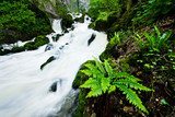 Lush green fern by the stony cascading stream