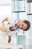 Male vet examining teeth of dog