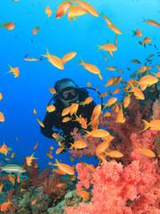 Fish, Coral and Scuba Diver