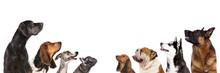 """Постер, картина, фотообои """"group of dogs is looking up"""""""
