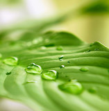 Green leaf and water drops.