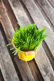 Fresh green grass in a bucket