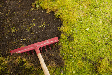 Removing moss in lawn