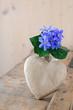 Herz und Leberbluemchen (Hepatica nobilis)
