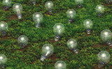 Cultivation of unlit light bulbs