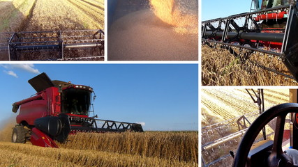 Harvesting Wheat Multiscreen