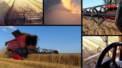 Wheat Harvest Multiscreen