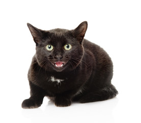Black frightened cat. Isolated on white background