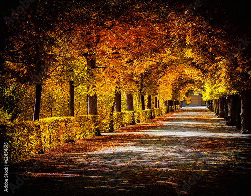Naklejka Autumn alley