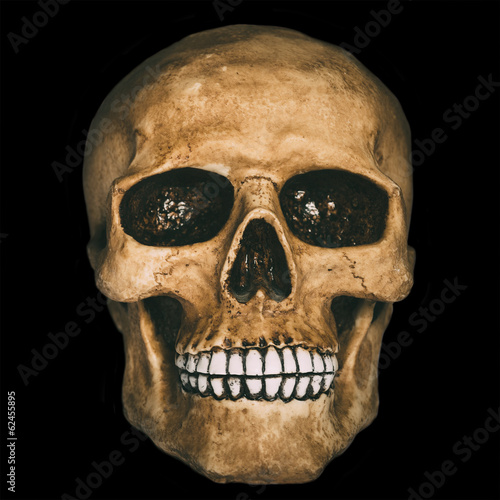Front view of human skull over black background