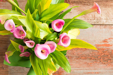 Beautiful fresh pink calla lilies