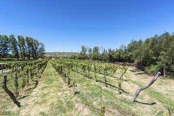 Vineyards in Payogasta in Salta, Argentina.