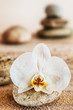 Beautiful delicate white orchid on a seashore