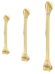 Growing Pains Humerus
