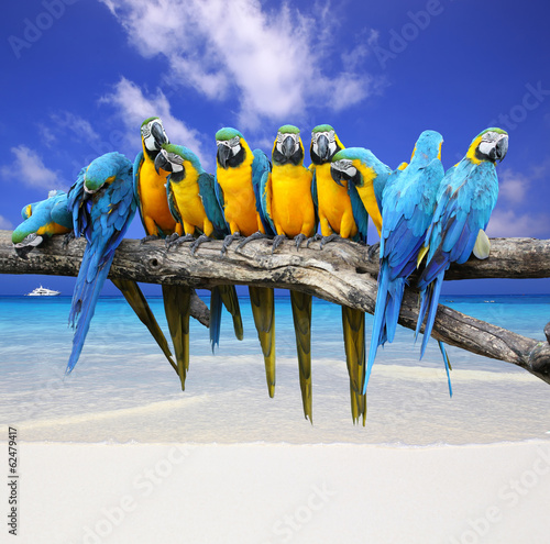 Blue and Yellow Macaw on the white sand beach white blue sky