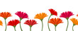 Horizontal seamless background with gerbera flowers. Vector.