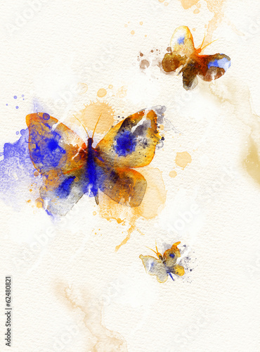 butterfly.watercolor illustration
