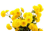Bouquet of yellow flowers, chrysanthemums.