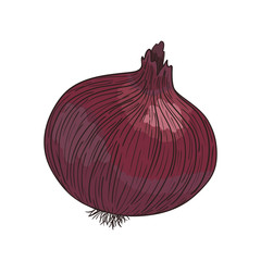 Red vector Onion  on white