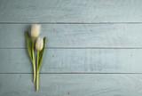 Fototapety two tulips