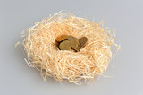 Nest with coins on gray background