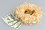 Nest with coins and banknotes on gray