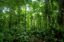 Tropikalne lasy deszczowe krajobraz, amazon