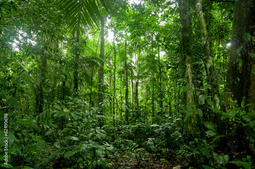 Poster Bossen Tropical Rainforest Landscape, Amazon