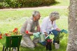 Mature couple watering young plants in lawn