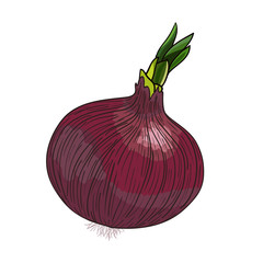 Onion_with_sprout_vector