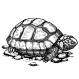illustration of engraving turtle on white background