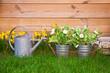 Fleurs de printemps et arrosoir