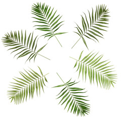 Collage of beautiful palm leaves isolated on white