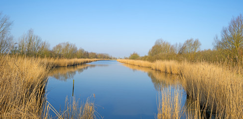 Reed bed along a lake in a sunny winter