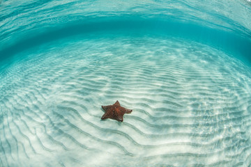 Caribbean seastar and sand