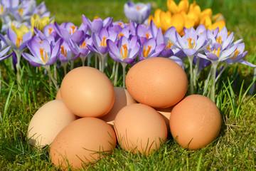 Ägg och krokus