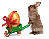 Funny Easter rabbit with a green wheelbarrow and golden egg