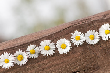 Gänseblümchen auf Holz, romantisch, Grußkarte, Alles Gute