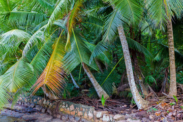 Tropical Palms, La Digue. Seychelles.
