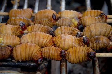 Edible palm weevil larvae (Rhynchophorus phoenicis) from the