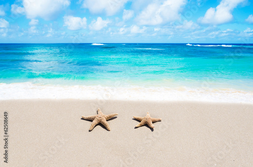 canvas print picture Starfishes on the sandy beach