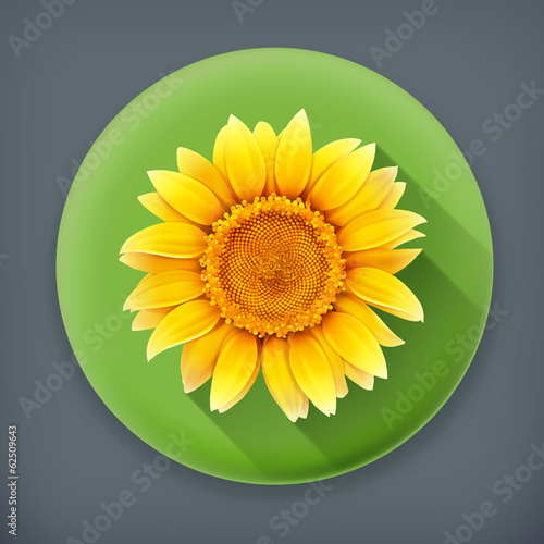 Sunflower, long shadow vector icon