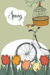 Spring garden, tulips and bike, design card